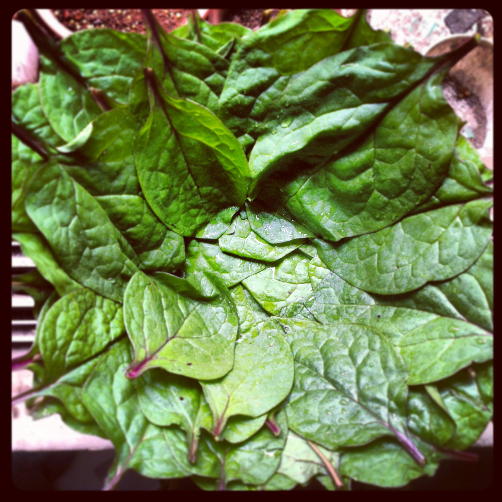 Malabar spinach leaves
